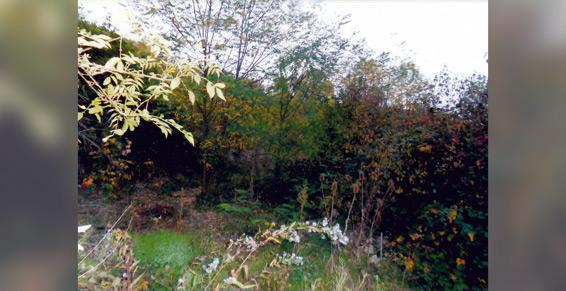 Jardins Parcs A Cournon D Auvergne Pres De Clermont Ferrand