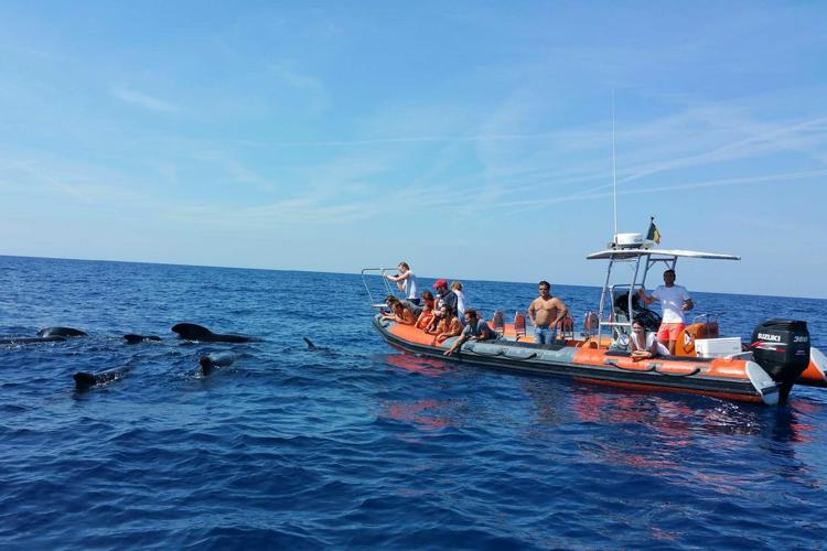 sanary aventure marine